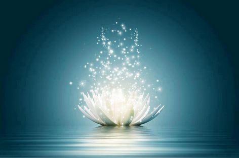 lotus_luminoso
