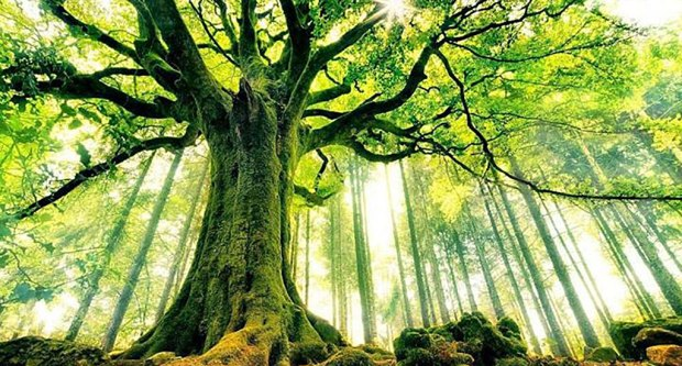 albero-grandioso