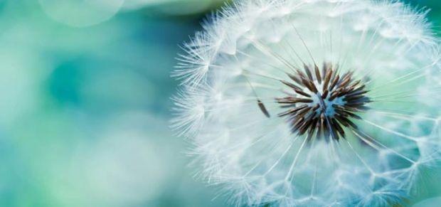 fiore_mindfulness
