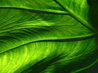 close_up_leaf