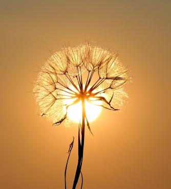 sole_dentro_fiore