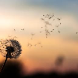 Mindfulness – MBSR per trasformare l'esperienza della sofferenza, del disagio e dello stress