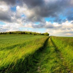 Coltivare la Mindfulness ai tempi del Covid-19
